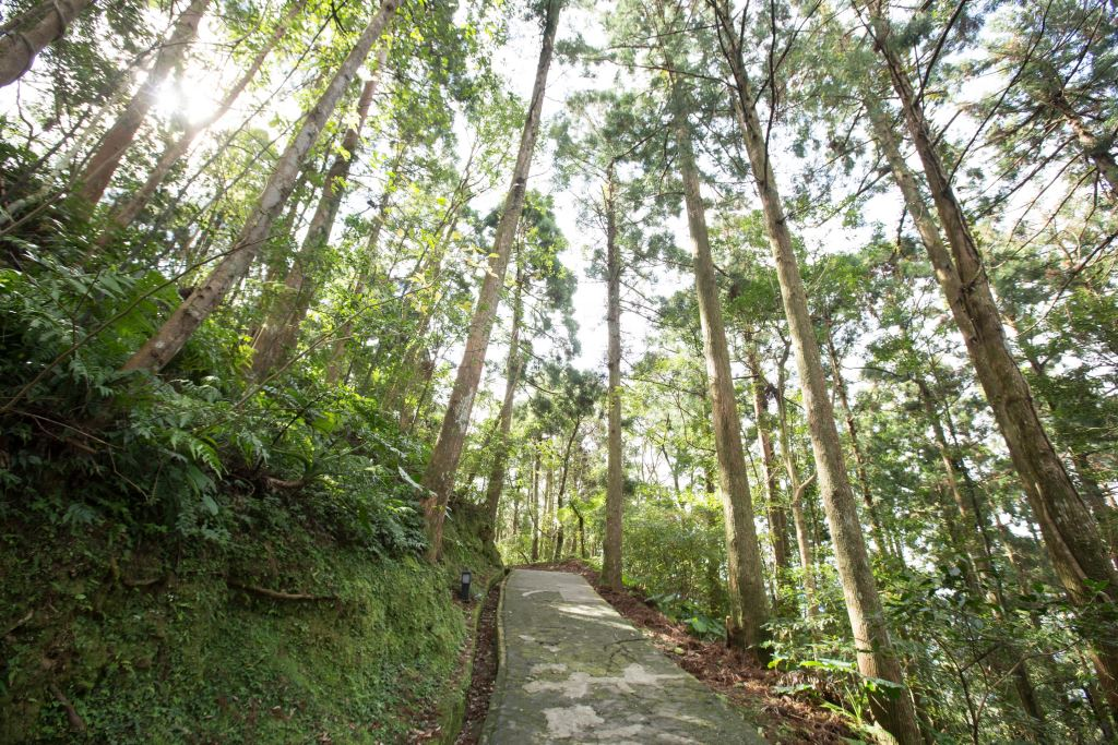 Dongyan Mountain Forest Recreational Area
